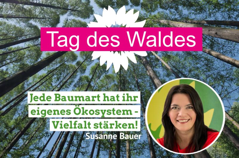 wald_susanne_bauer